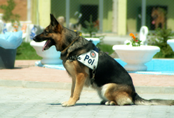 The Police take pride in their dogs!